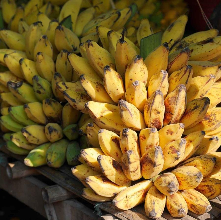 bananas-banana-shrub-fruits-yellow-47305.jpeg
